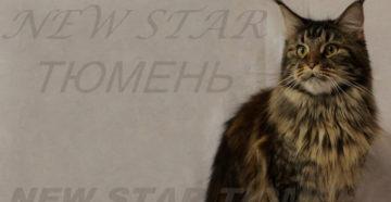 """Питомник """"New Star"""""""