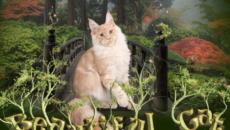 Питомник «Beautiful Cat»