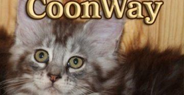"""Питомник """"Coon Way"""""""