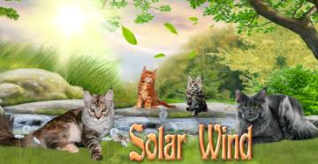 Питомника «Solar Wind»
