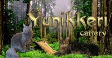 """Питомник """"Yunikkeri"""""""