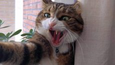 Об агрессии кошек