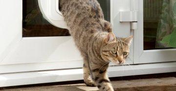 Как выбрать лаз для кошки
