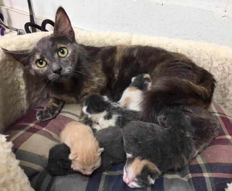 О беременности кошки